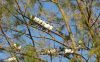 Some birds :-)