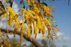 some nice tree flowers