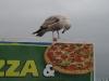 Pizza für alle ;-)